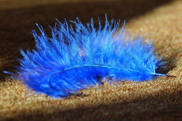 modré pírko na koberci