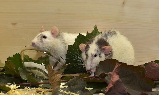 potkani v listí