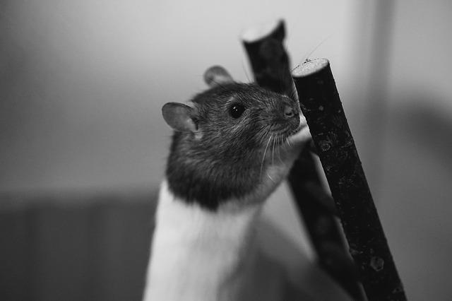 žebřík pro myšku