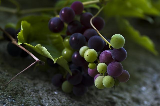 Víno dvou odrůd
