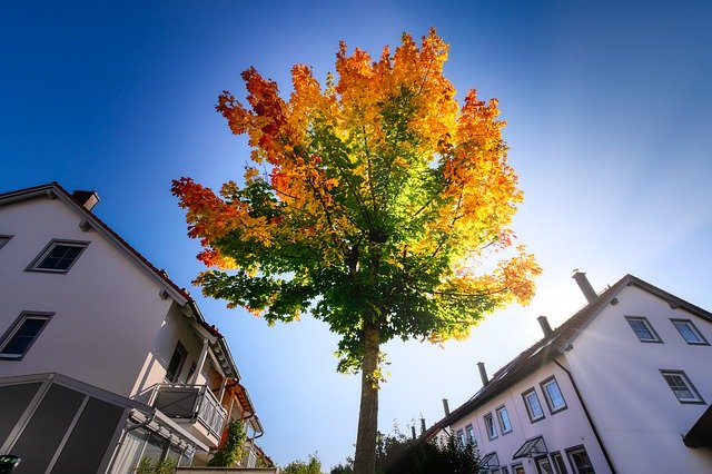 po pravé a levé straně jsou obytné domy, uprostřed listnatý strom, jehož koruna se zbarvuje do žluta a oranžova